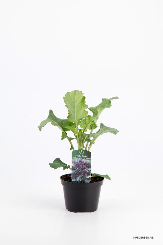 Asparges Broccoli